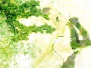 Miwa Yoshikazu Wallpaper
